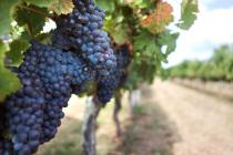 Belle récolte 2016 pour UG Bordeaux