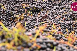 3800 hectares au coeur du plus prestigieux vignoble du monde